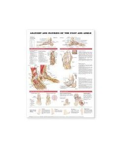 Anatomy & Injuries Of the Foot and Ankle