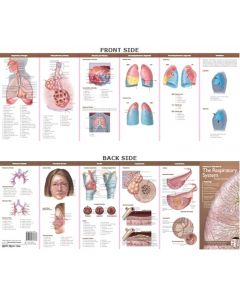 Anatomy & Disorders of the Respiratory System Study Guide